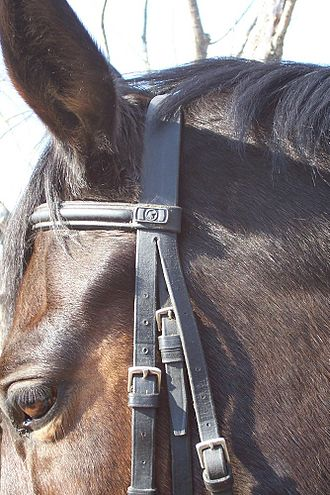 Bridle - The crownpiece runs over the horse's poll, and the browband across the forehead. The cheekpieces run down the sides of the horse's face.