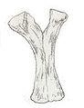 Euskelosaurus africanus ischia.jpg