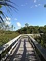 Everglades Mahogany Trail - panoramio.jpg
