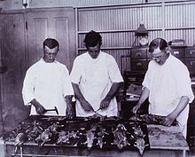 Examining Rats for Bubonic Plague New Olreans 1914 a024245.jpg
