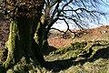 Exmoor, near Warren Bridge - geograph.org.uk - 80159.jpg