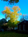 Fall in Madison - panoramio (6).jpg