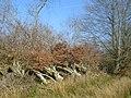 Fallen trees near Cronberry - geograph.org.uk - 1215154.jpg