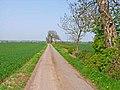 Farm road to West Newbiggin, near Sadberge - geograph.org.uk - 167212.jpg