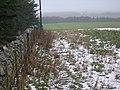 Farmland and Forestry - geograph.org.uk - 335992.jpg