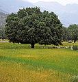 Fars - Kazeroun road - panoramio.jpg