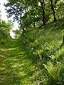 Ferny path - geograph.org.uk - 187893.jpg
