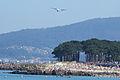 Festival Aéreo de Vigo 2012 (7622582622).jpg