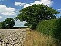 Field and trees near Southwood Farm - geograph.org.uk - 913399.jpg