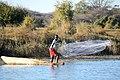 Fischer Okavango (2018).jpg