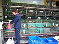 Fish tanks in Zhuhai.jpg