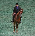 Five Gaited Saddlebred at the 2009 Worlds Championship Horse Show (3930558874).jpg