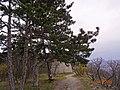 Flóra pihenőnél - panoramio.jpg