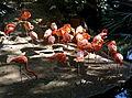 Flamingos (3022695905).jpg