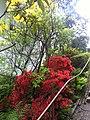 Fleurs très rouges - panoramio.jpg