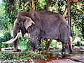 Flickr - ronsaunders47 - ELEPHANTS UP CLOSE 6.jpg