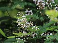 Flora from Savandurga IMG 9605.jpg