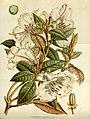Flore des serres et des jardins de l'Europe (8594752819).jpg
