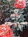 Flower20180428 085516.jpg