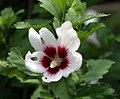 Flower8 (527737694).jpg