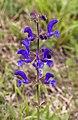 Flower (3797559187).jpg