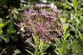 Flower 1881.jpg