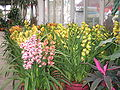 Flowermarket3.jpg