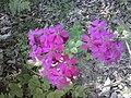 Flowers - Fiori (19146242779).jpg