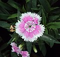 Flowers - Uncategorised Garden plants 228.JPG