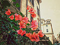 Flowers in Rione Monti Rome.jpg