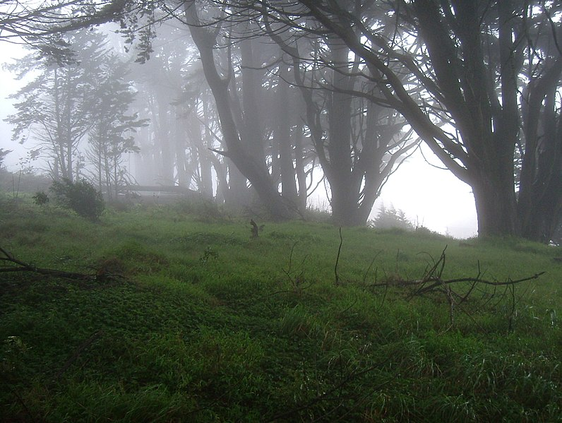 File:Fog near Daily City 2004 (10303747896).jpg