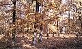 Foloi Forest - panoramio.jpg