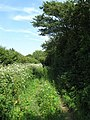 Footpath to Combe Haven (2) - geograph.org.uk - 1358866.jpg