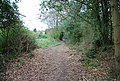 Footpath to Forest Rd - geograph.org.uk - 1273421.jpg