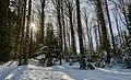 Forêt communale d'Accous.jpg