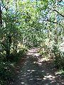 Forêt de la Coubre 016.jpg