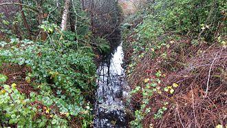 Forbes Creek (Washington) - Image: Forbes Creek blackberries