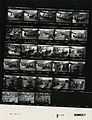 Ford B1114 NLGRF photo contact sheet (1976-08-18)(Gerald Ford Library).jpg