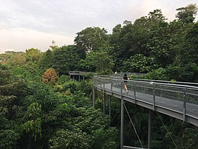 Forest Walk, Southern Ridges.jpg