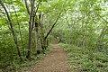 Forest in Mt.Kesoku 01.jpg