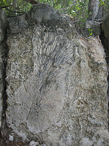 Windley Key Fossil Reef Geological State Park - Wikipedia