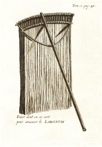 Labdanum - Whip used to collect ladanum (Tournefort, 1718, Voyage du Levant)
