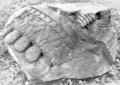 Fragment of stone statue at the Museo Nacional de Antropologia e Historia Mexico 1.png