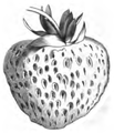 Fraise Victoria Vilmorin-Andrieux 1883.png
