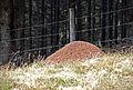 Freiländer Alm Ameisenhaufen2.jpg