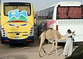 From Hurghada to Luxor 7.jpg