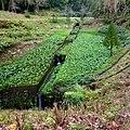 Furnas, S. Miguel, Açores,Portugal - panoramio (11).jpg