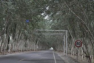 China National Highway 315 - Image: G315 Highway, Hotan Pref., Xinjiang, China Cruising under the trees