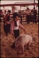 GARFIELD COUNTY FAIR. JUDGING LIVESTOCK RAISED BY YOUNGSTERS IN THE 4-H PROGRAM - NARA - 552663.tif