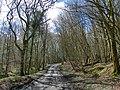 GOC Watton-at-Stone 015 Brickground Wood, Tewin (27239404390).jpg